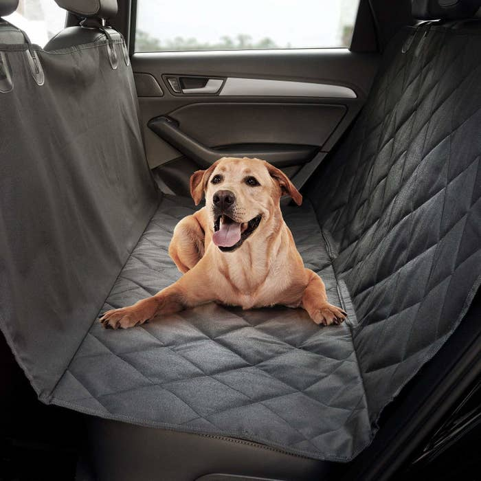 Dog sitting in the back of a car on top of the spread out cover.