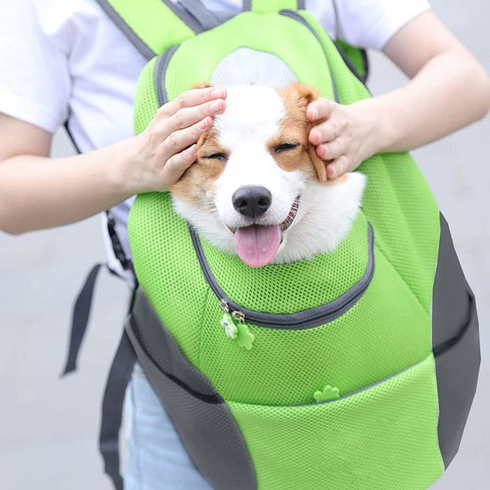 A smiley dog inside the backpack.