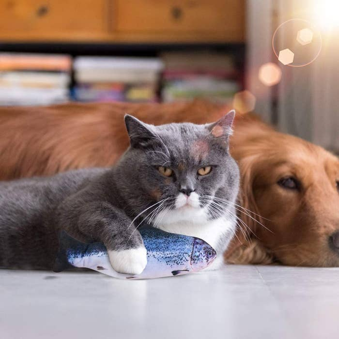 A cat holds the fish-shaped toy in their paws while laying next to a dog