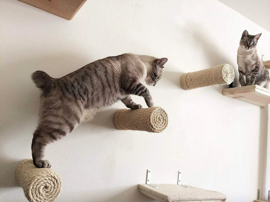 A pair of cats climbing on the cylindrical cat steps mounted on a wall