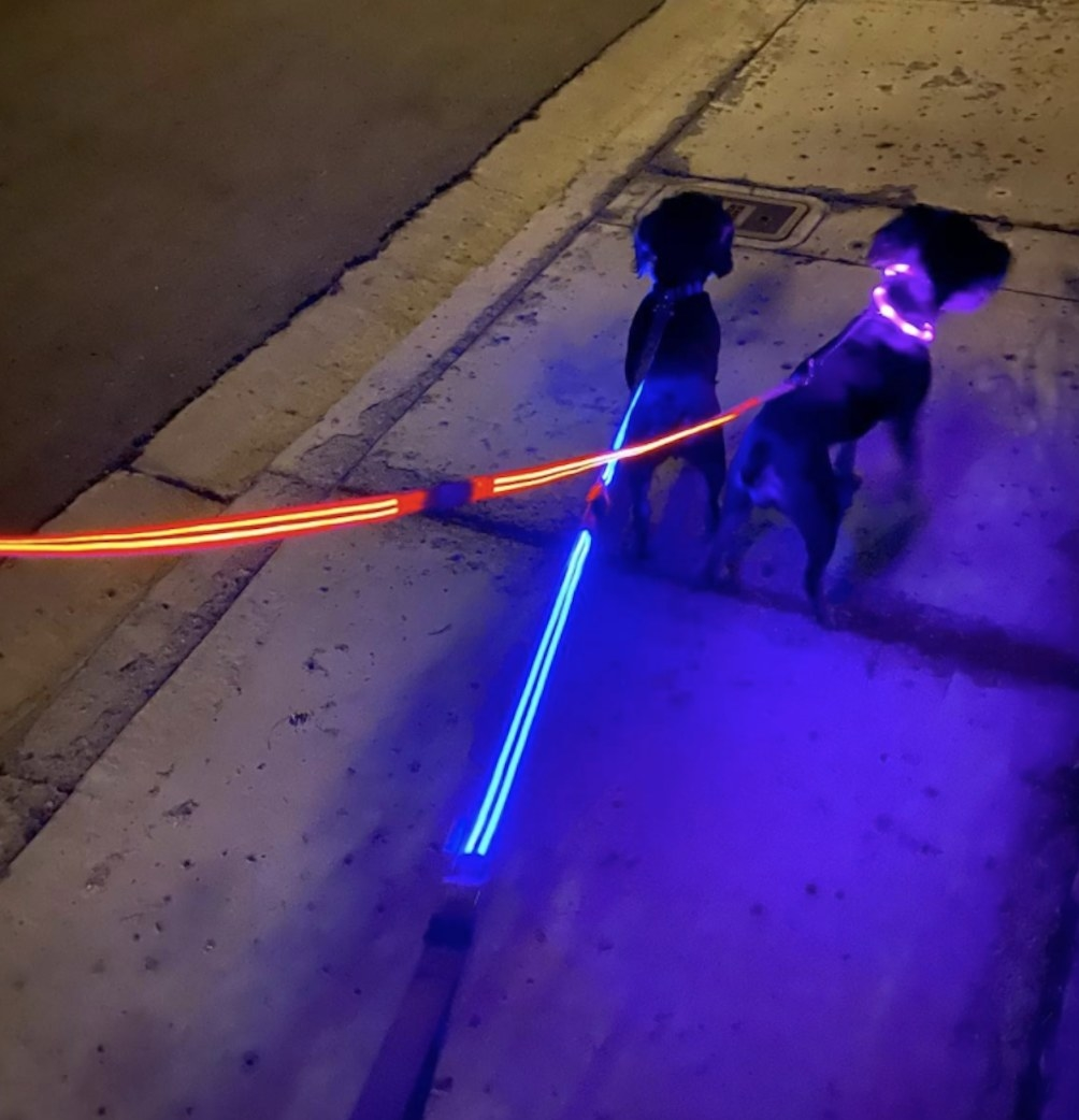 Two dogs walking with light-up LED leashes