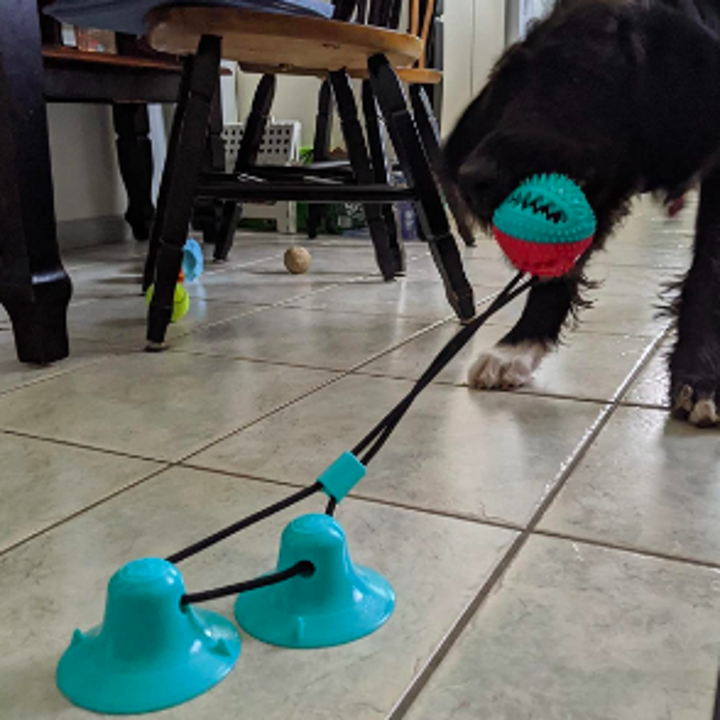 Reviewer's dog pulling textured ball attached by rope to two suction cup pads on kitchen floor