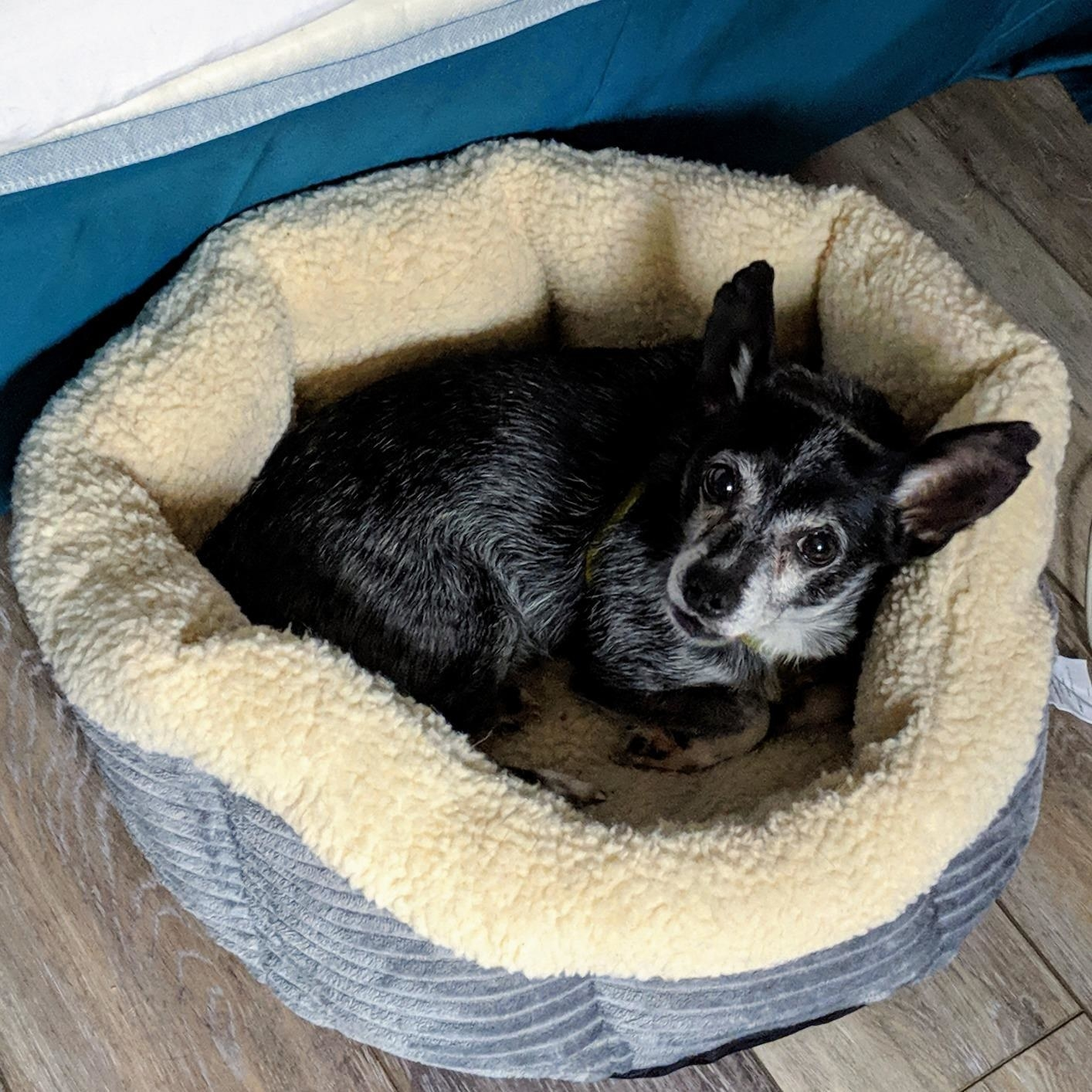 The dog bed in the round style, which has a plush sherpa lining