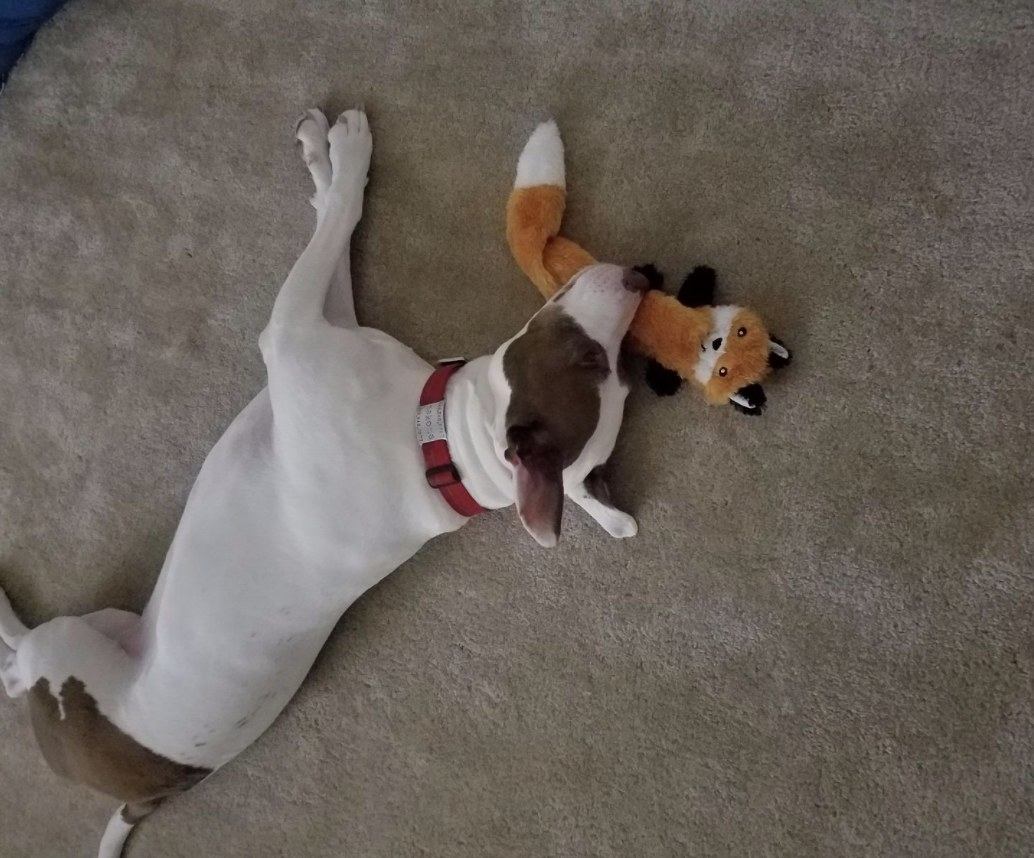 A dog is sleeping on top of a dog toy shaped like a fox