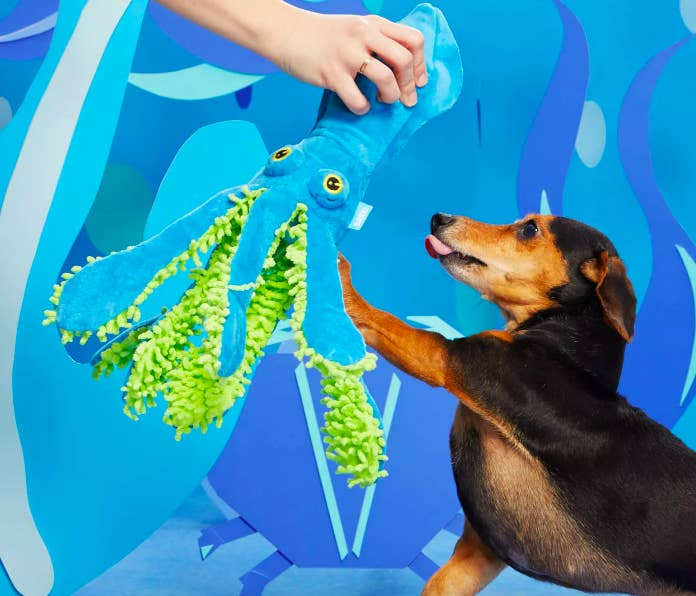 Dog playing with squid shaped squeaker toy with fuzzy tentacles