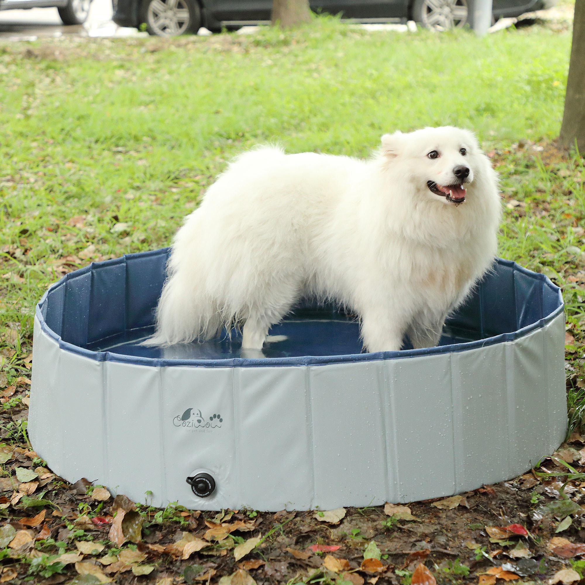 Dog in medium-sized splash pool