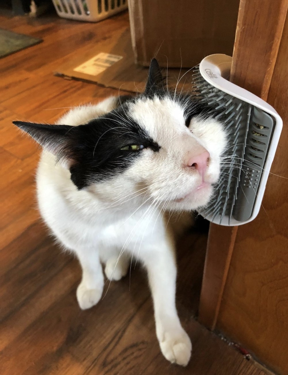 A black-and-white cat rubbing its face on a Catit grooming toy that adheres to any corner