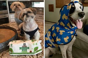 to the left: two dogs with grooming wipes, to the right: a dog in a hooded raincoat