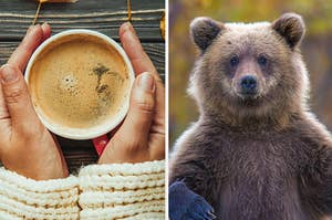 A warm coffee on the left and a grizzly bear on the right