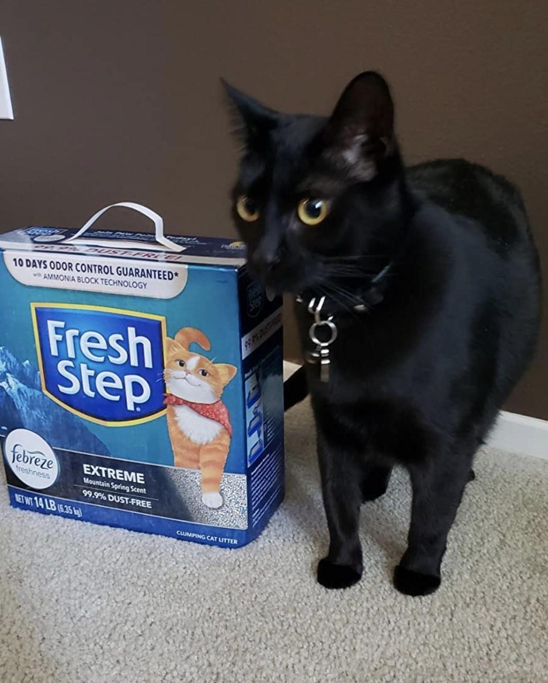 a black cat next to a box of fresh step cat litter