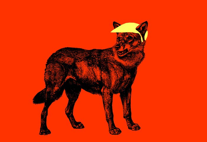 A wolf in Trump's image.