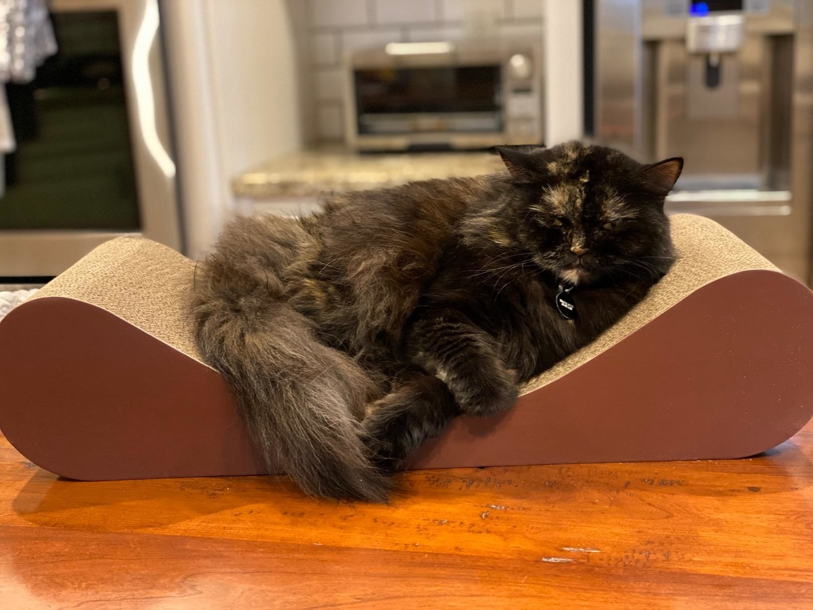 A cat rests on the scratcher, which has rounded ends and dips in the middle, like a backless couch