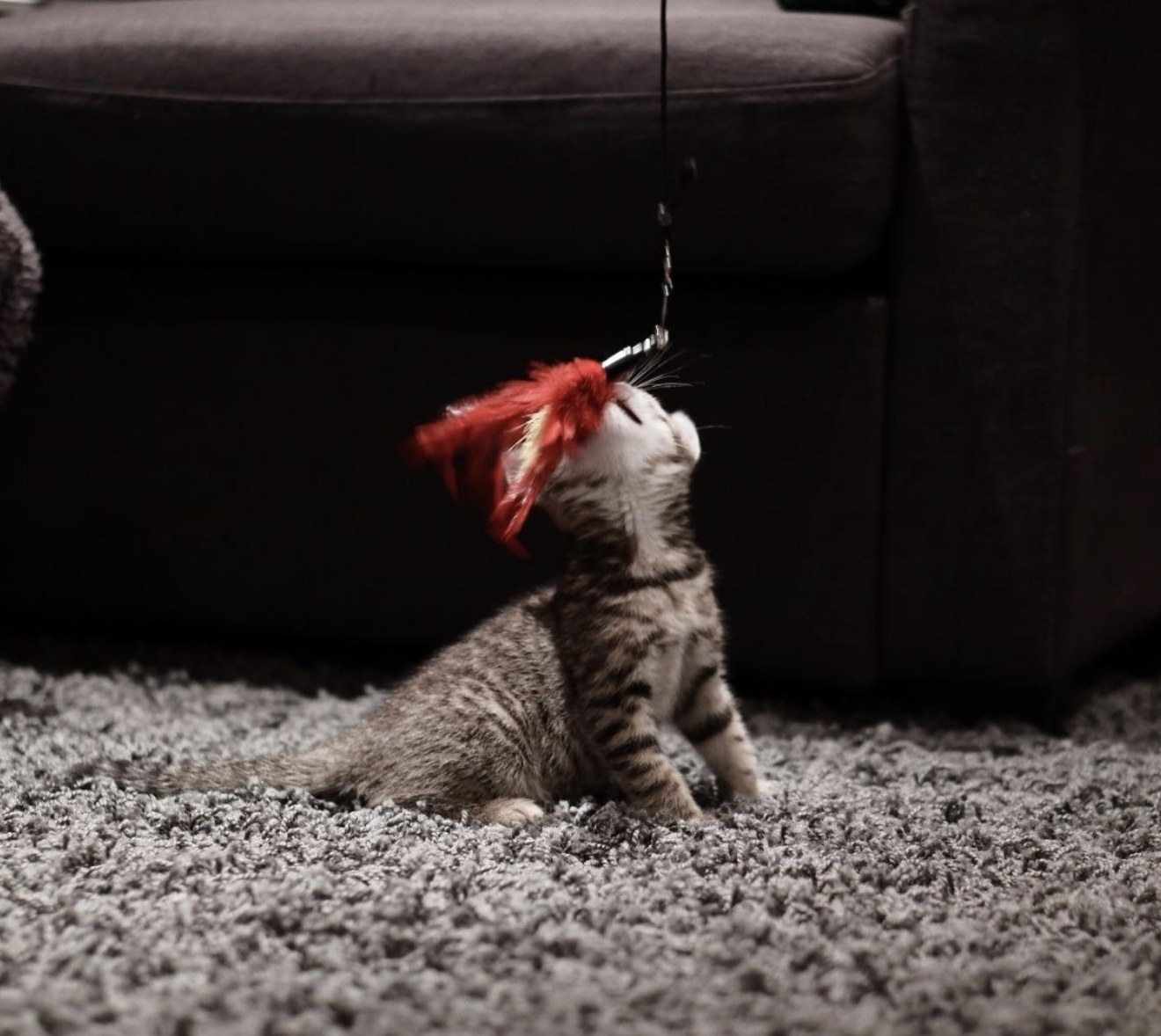 a striped kitten playing with a red feather attached to a wand