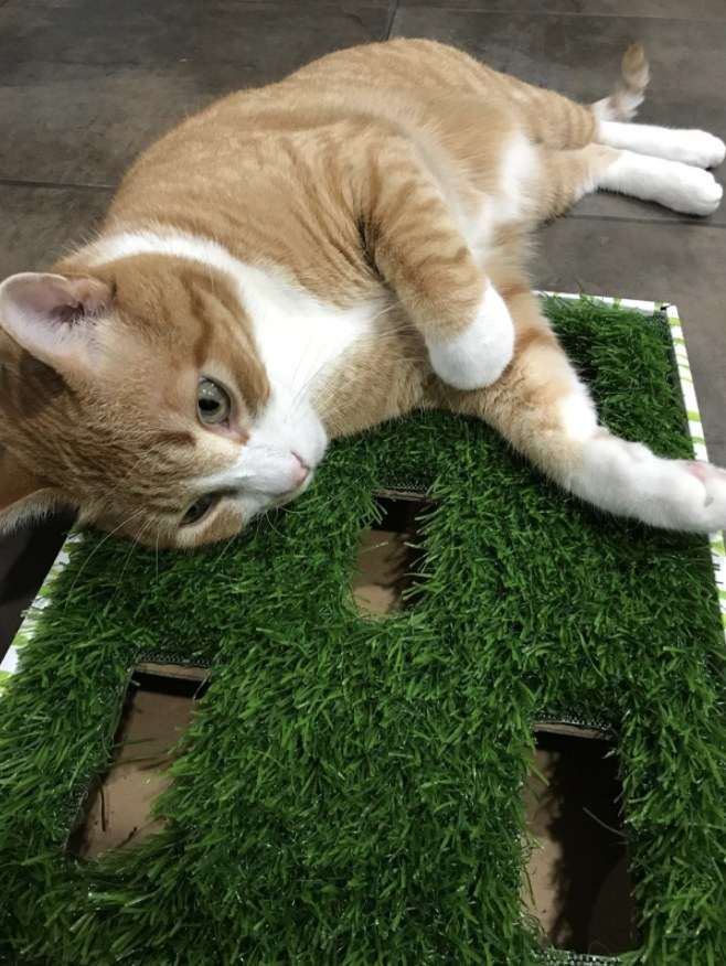 an orange cat laying on a cat scratcher that has grass on top of the board
