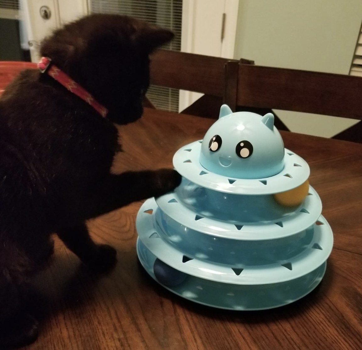 a black kitten playing with a cyan triple-tiered roller toy