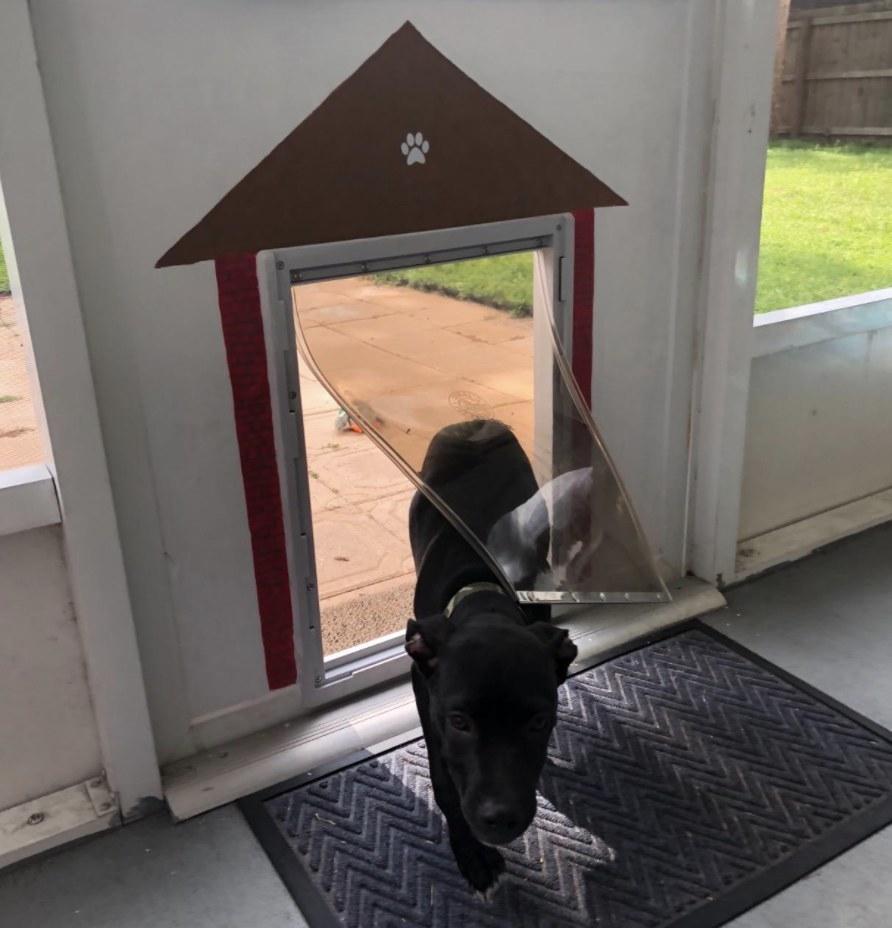 A black puppy is walking through a dog door