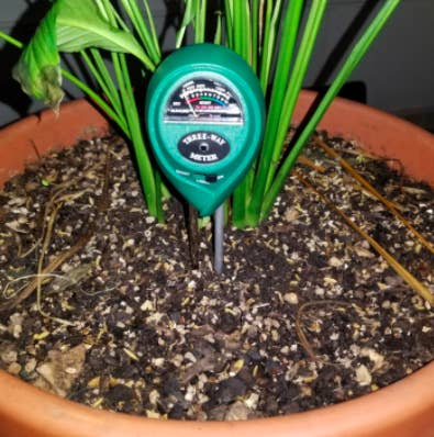 the meter in a potted plant
