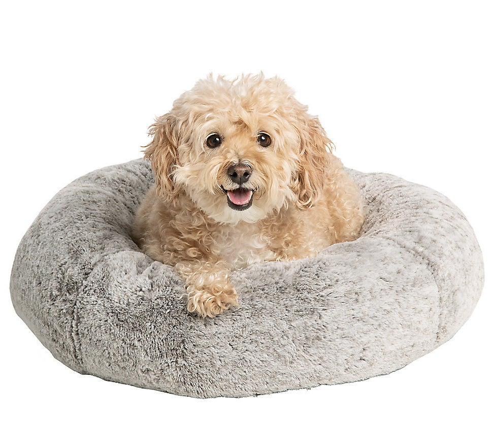 A small dog in the gray round cushion bed