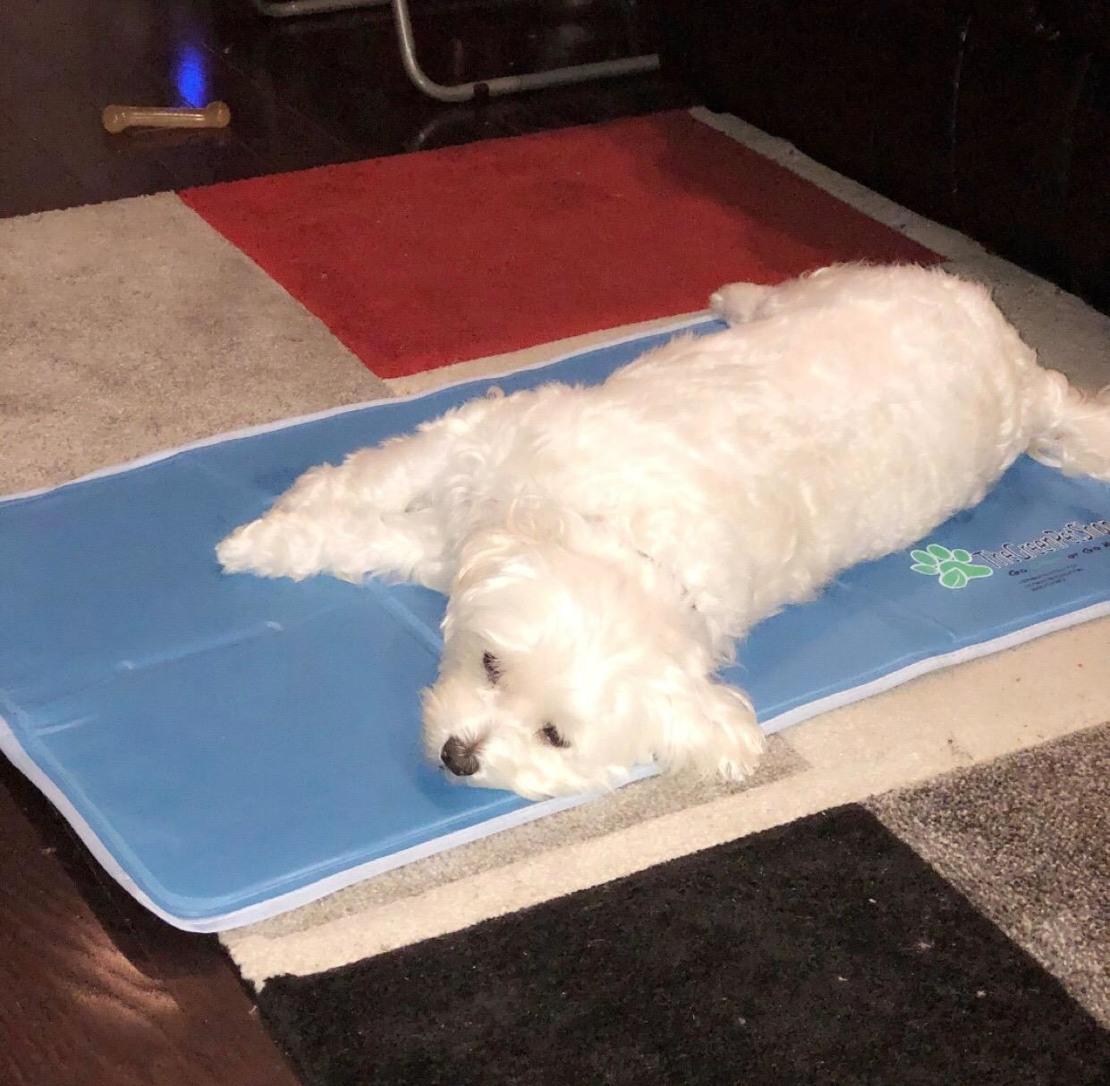The mat, which is large enough for a small dog to lay his entire body down on it