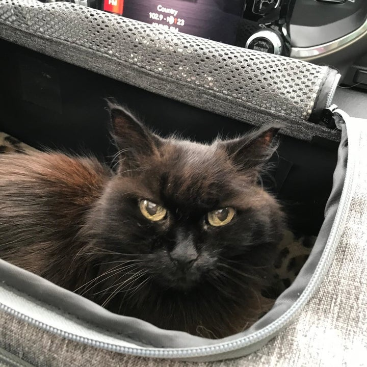 A cat with its head peeking out the top of the zipped-open carrier