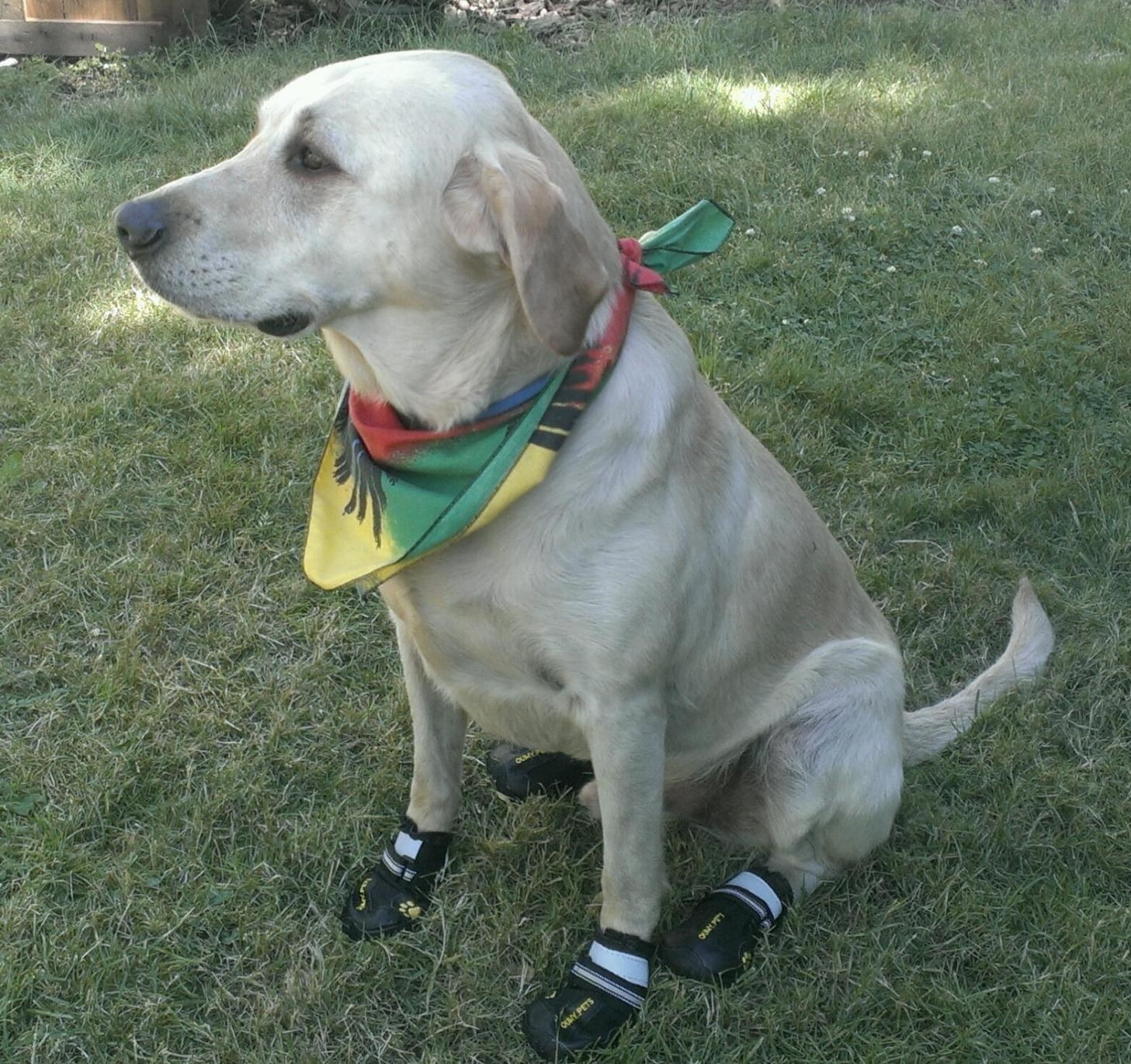 The booties, which secure around the dog's ankle with velcro