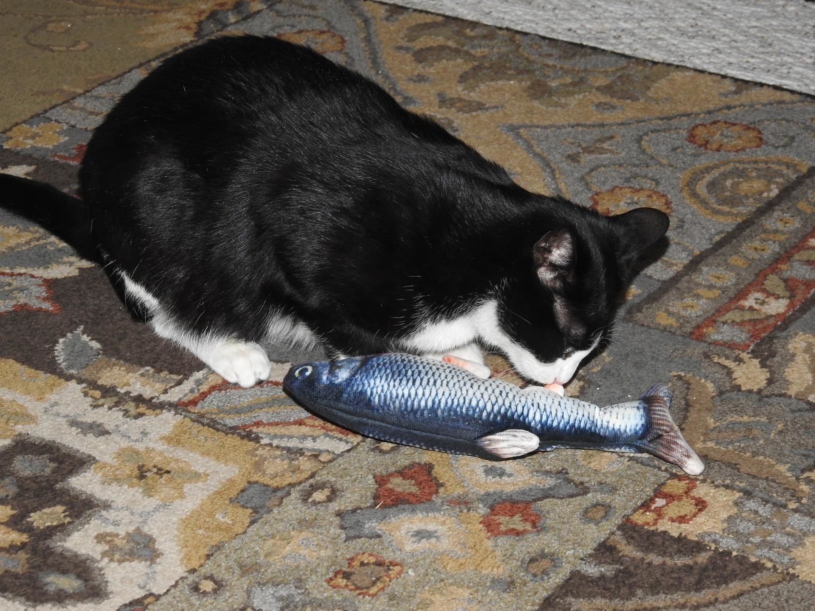 A cat playing with the fish toy, which is fabric, but designed to look like a fish