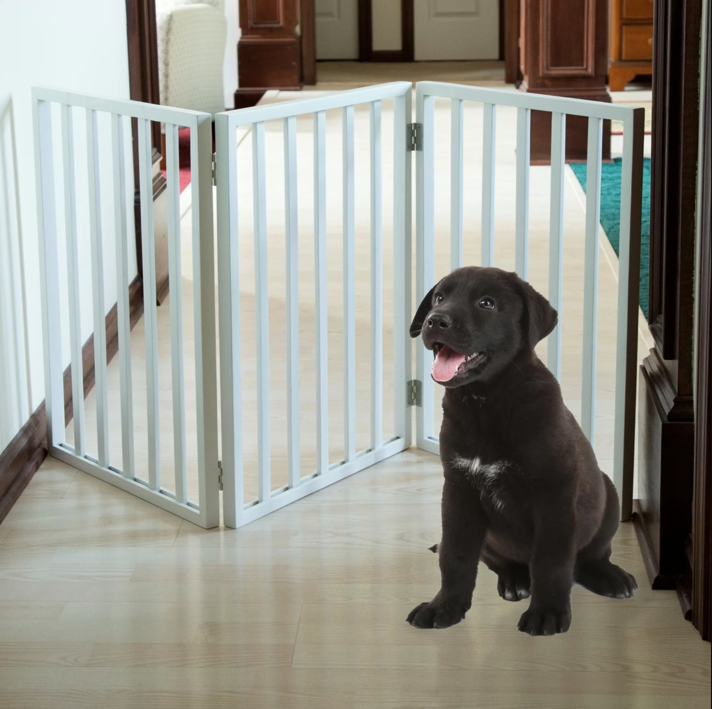 The pet gate with a puppy sitting in front of it