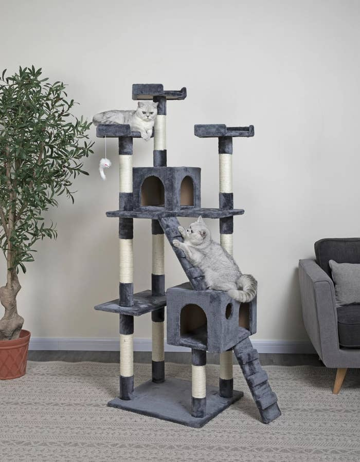 The cat tree in slate gray next to a small tree
