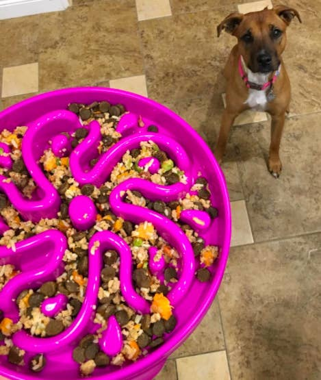 A reviewer serving their dog food in the purple bowl with a raised flower design
