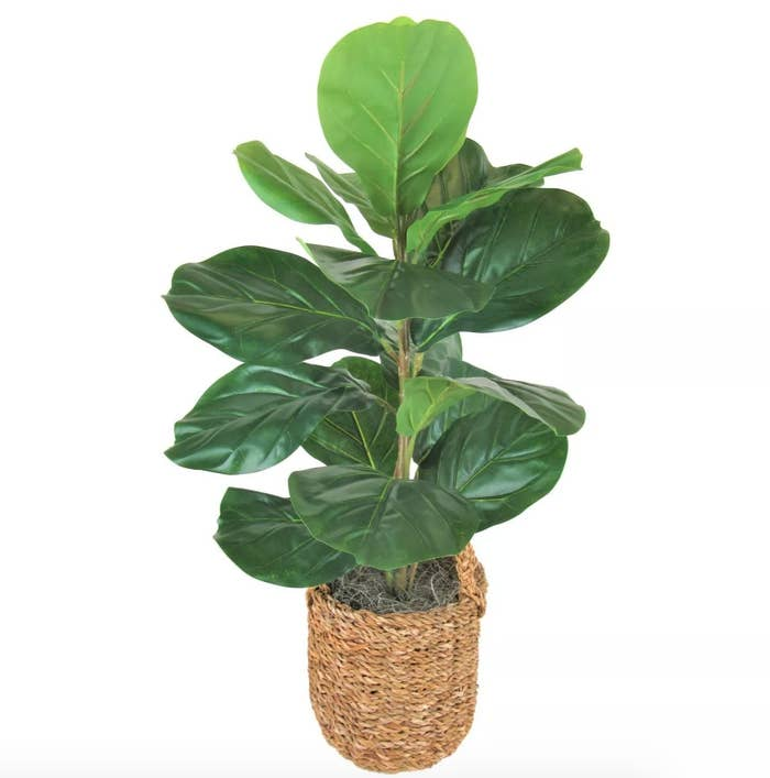 A green artificial fiddle leaf fig tree in a brown basket