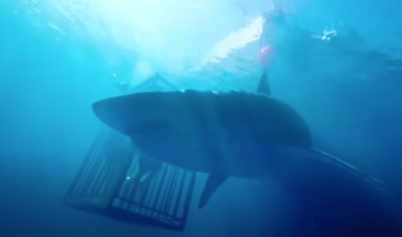 A shark circles the cage that sisters Lisa and Kate are trapped in