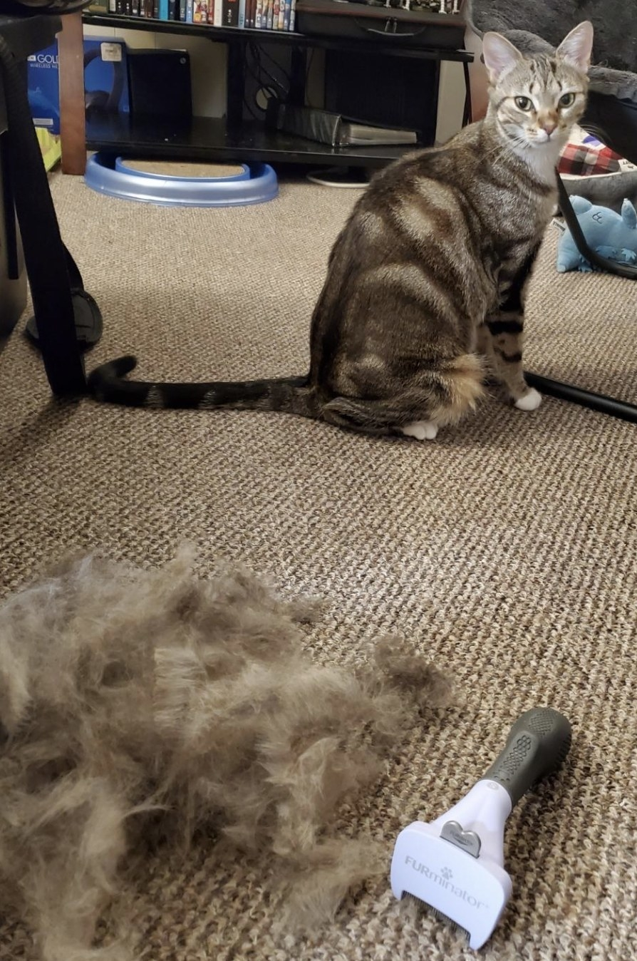 a brown and beige striped cat sitting behind a mound of fur and a de-shedding tool