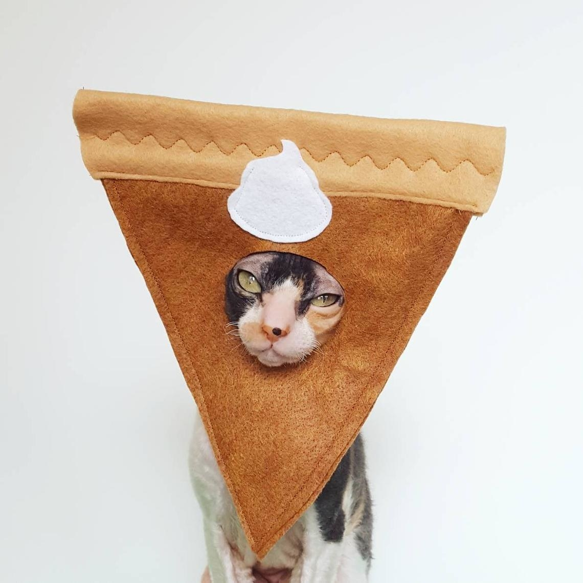 A cat wearing the pie costume