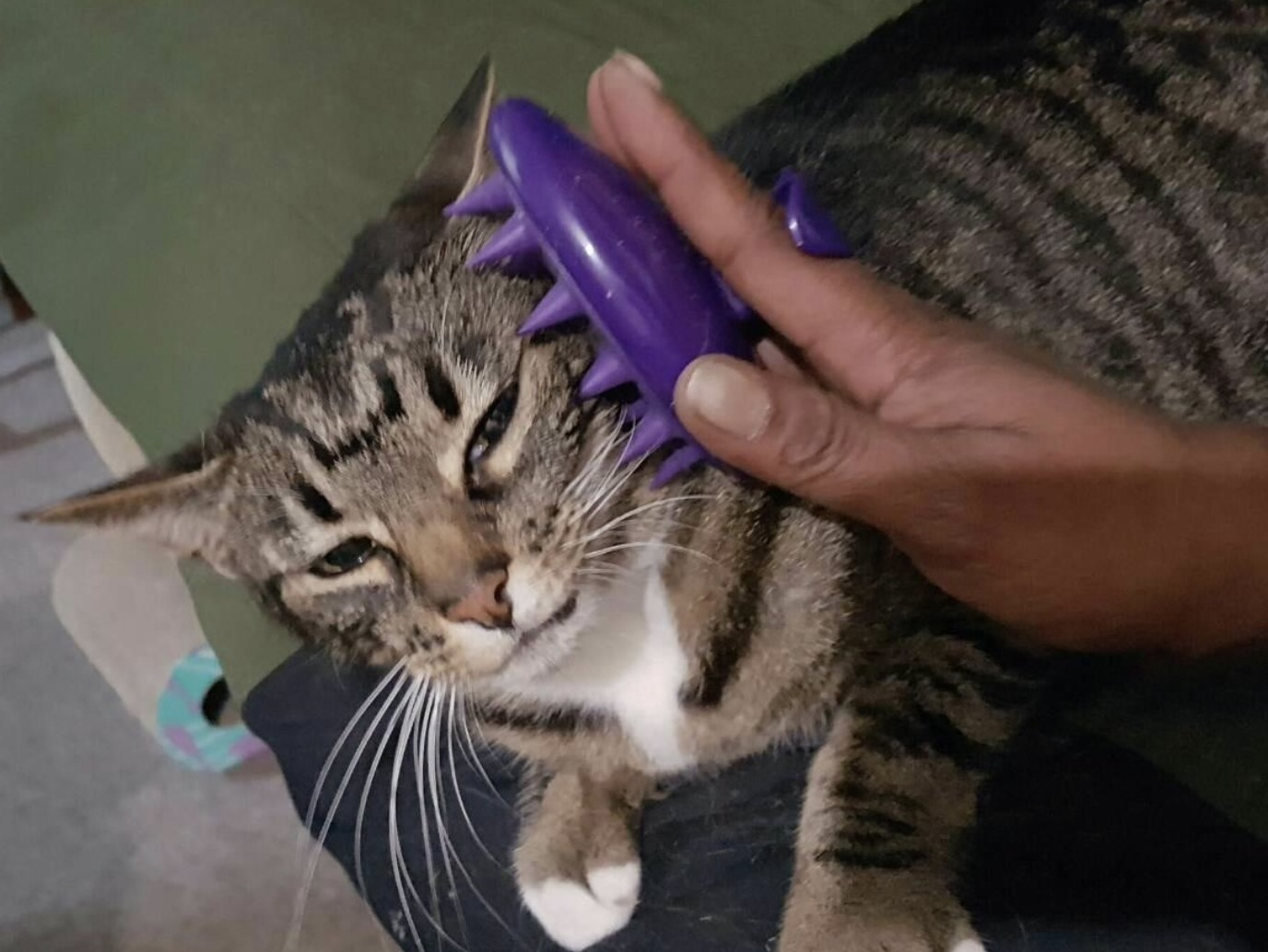 a striped cat being brushed with a purple silicone brush that fits in the palm of a hand