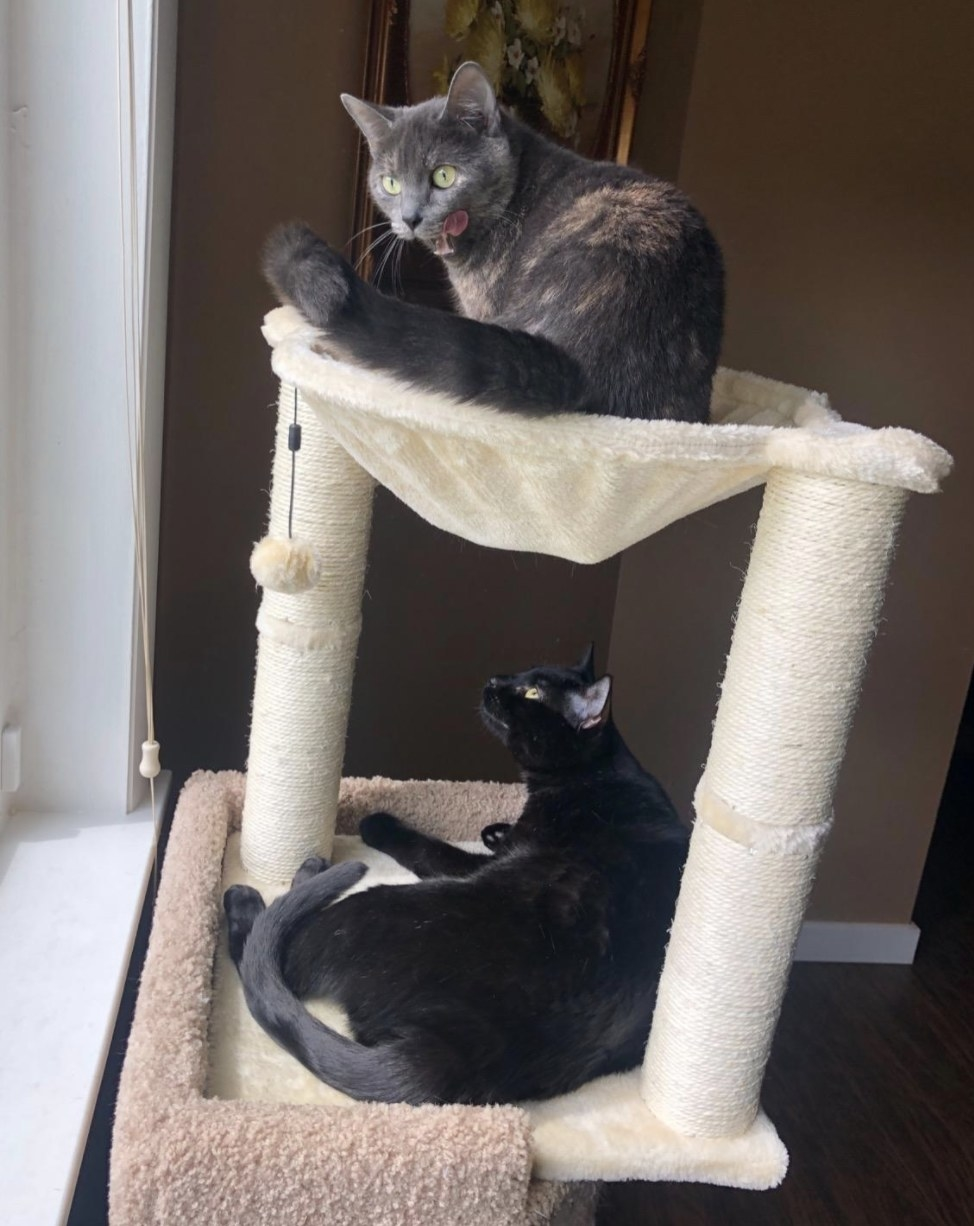 A grey cat sitting on top of a scratching post and a black cat sitting at the base of the scratching post
