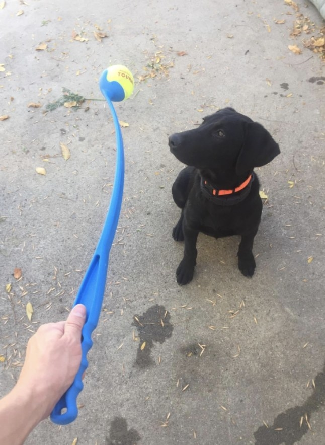 Dog and owner play with Chuckit! ball launcher