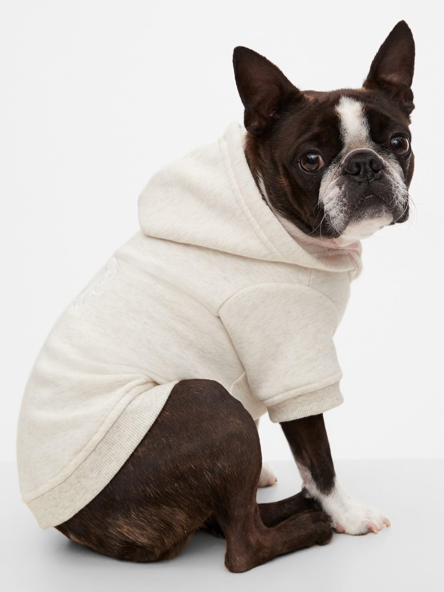 canine model wearing dog logo hoodie