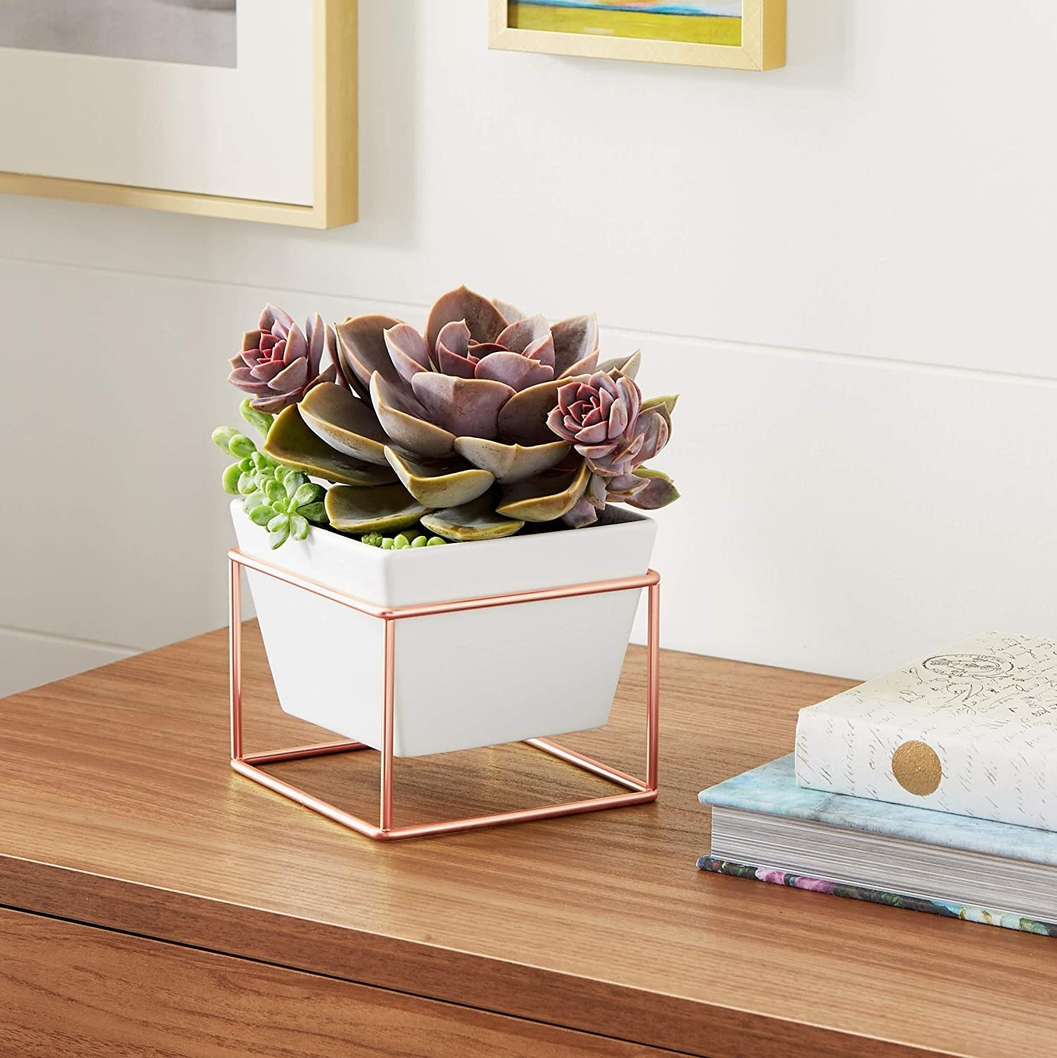 One of the planters containing a succulent on a wooden console table