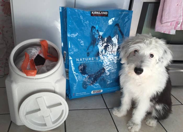 The reviewer's dog with the white food storage container