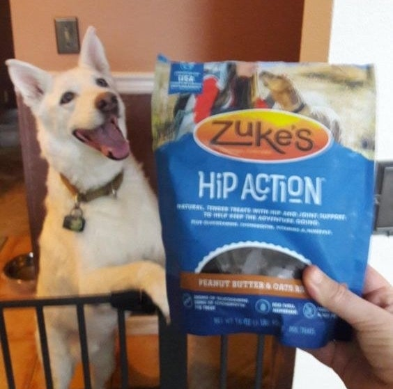 Reviewer holding the dog treats in front of excited dog