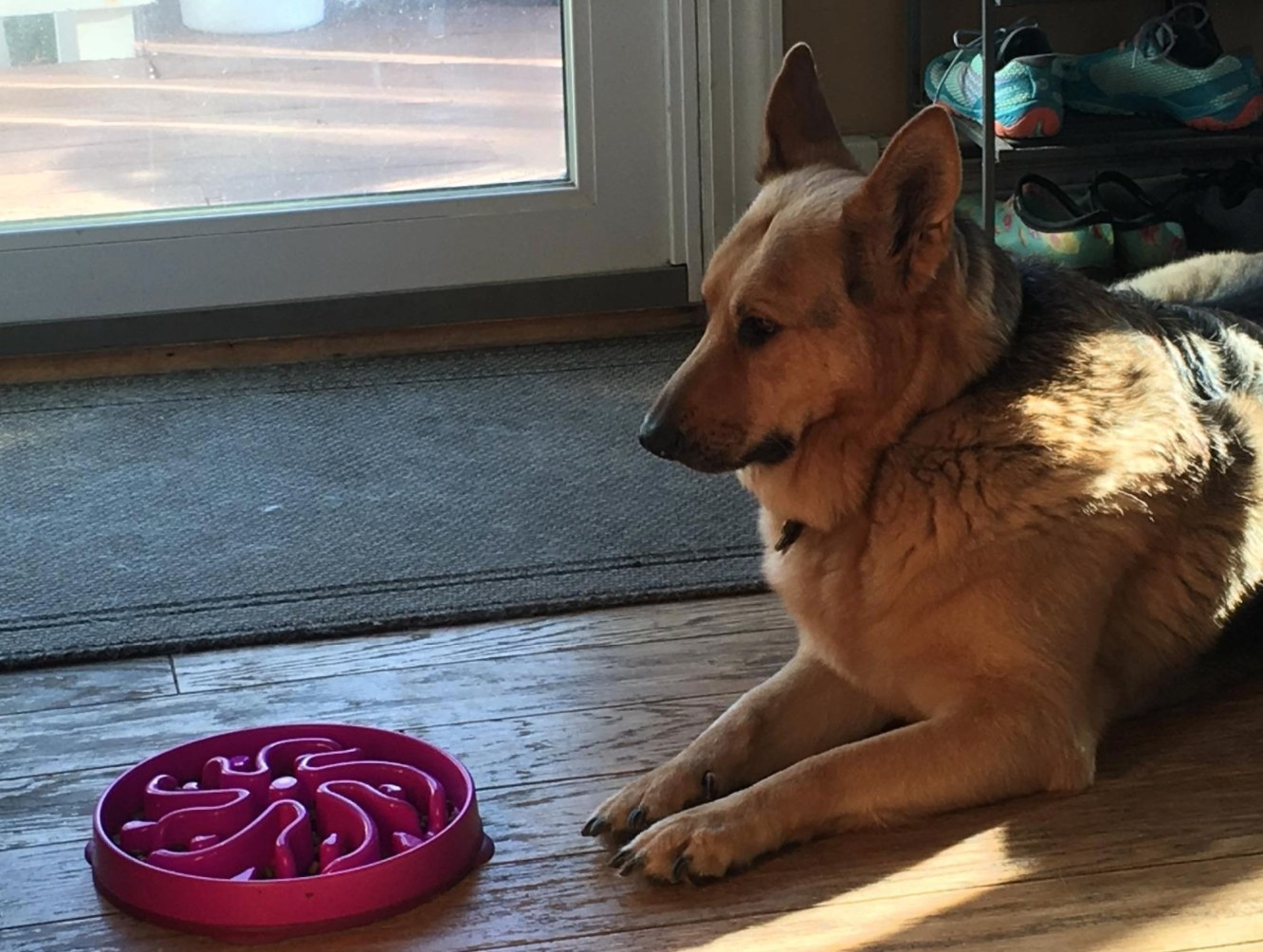 A reviewer's dog with the pink hound fun feeder