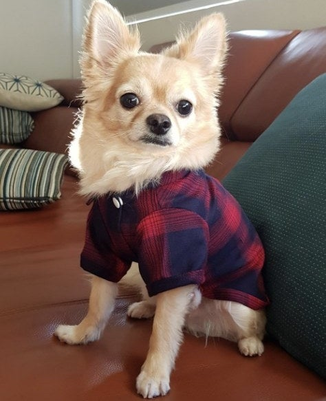 Dog wears plaid shirt in red