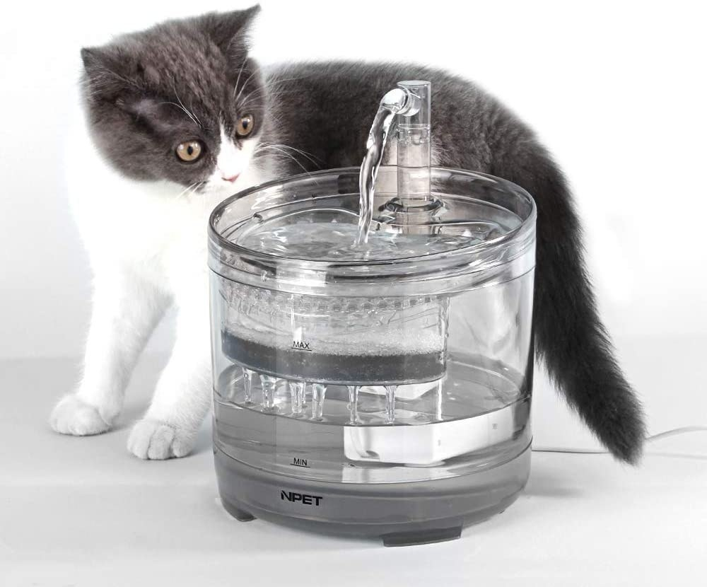 Cat standing beside see-through drinking filter bowl