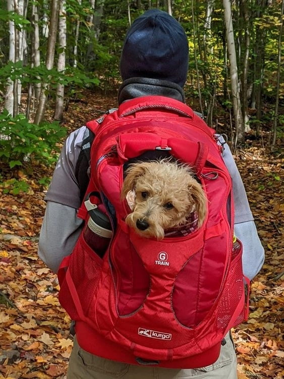 Reviewer carrying their dog in the backpack