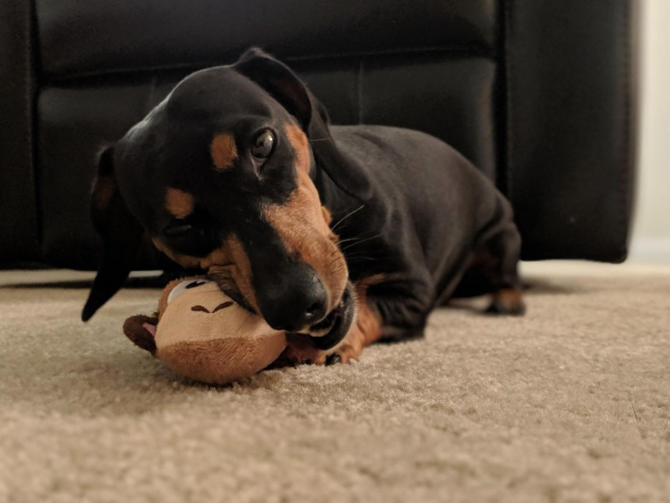 The reviewer's dog chewing on the small monkey squeaky toy