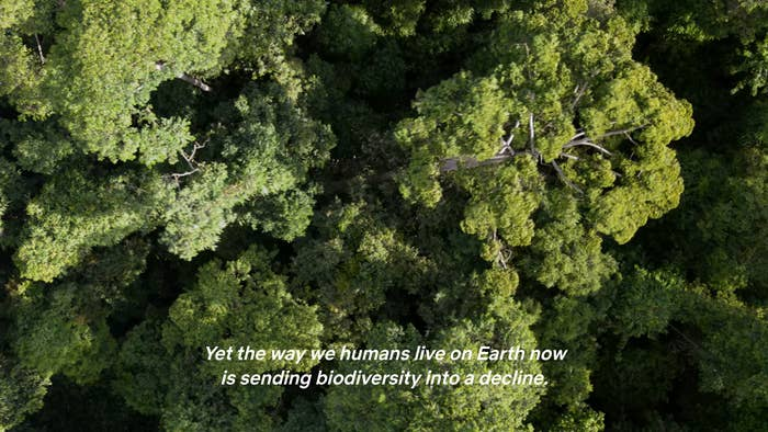 """Birds-eye view of the top of treetops with caption: """"Yet the way we humans live on Earth now is sending biodiversity into a decline."""""""