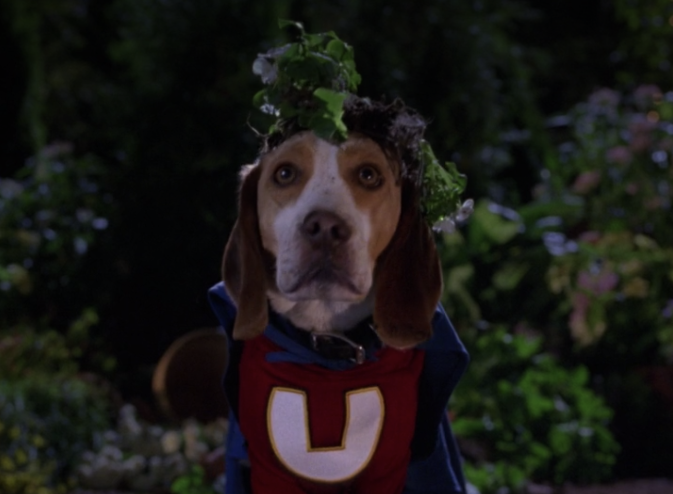 Underdog wears his suit and has a plant on his head