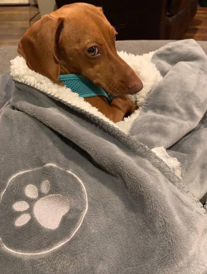 The plush gray and white blanket