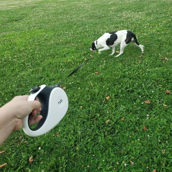 Reviewer walking dog at length with the leash