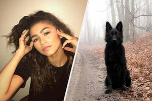 Zendaya's animagus is a beautiful german Shepard